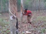 yudi-petani-karet-di-pingaran-kecamatan-astambul-kabupaten-banjar-kalsel-24112020.jpg