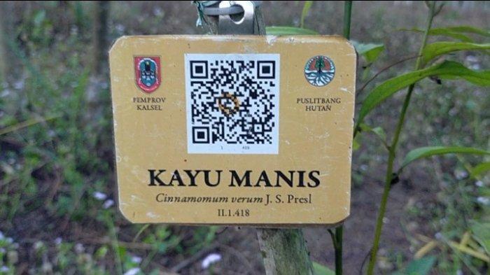 Di Taman Hutan Hujan Tropis ini bisa mengenal berbagai jenis tanaman hingga pohonan langka di Kalsel.