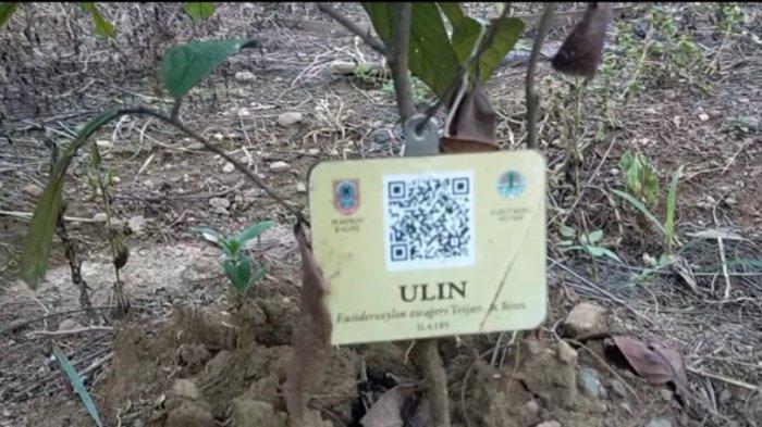 Di Taman Hutan Hujan Tropis ini bisa mengenal berbagai jenis tanaman hingga pohonan langka di Kalsel