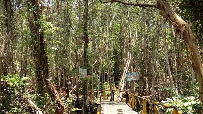 Eksotisme Hutan Galam Perawan Swarangan Tanahlaut, Berdekatan dengan Port Emas Hitam