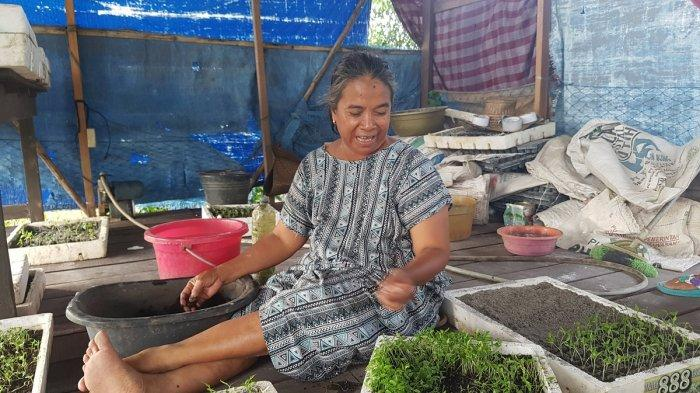 Cabai Hiyung dari Tapin Jadi Objek Studi Banding dan Penelitian Mahasiswa Pertanian
