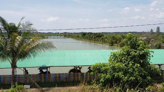 Kuliner Kalsel Lesehan Tambak Ikan Bincau di Kabupaten Banjar, Makan Berlauk Ikan di Tepi Kolam