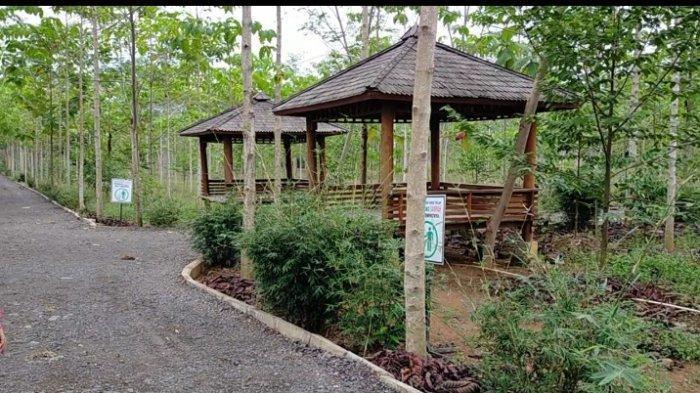 Lingkungan Taman Hutan Hujan Tropis di area lahan Perkantoran Pemprov Kalsel di Kota Banjarbaru.