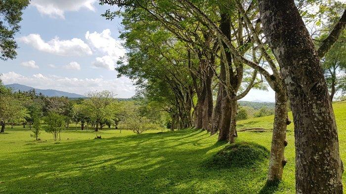 Panorama alam wisata Kalsel Taman Permana Pelaihari Kabupaten Tanahlaut hamparan savana hijau luas dan udara yang segar.