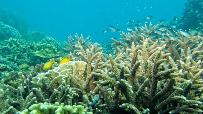 Pesona Pulau Samber Gelap Wisata Kalsel di Kotabaru, Paling Bagus Dikunjungi di Bulan-bulan Ini - pesona-bawah-laut-wisata-kalsel-pulau-samber-gelap-di-kabupaten-kotabaru-03.jpg
