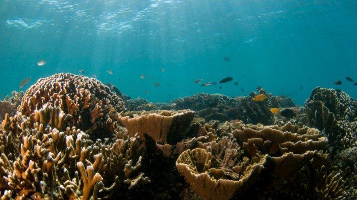 Pengunjung Wisata Kalsel Pulau Samber Gelap Kotabaru pun Disuguhi Ikan Laut Segar Tangkapan Nelayan - pesona-bawah-laut-wisata-kalsel-pulau-samber-gelap-di-kabupaten-kotabaru02.jpg