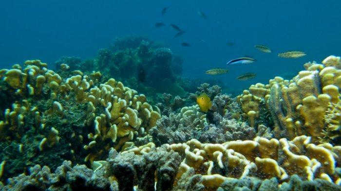 Pengunjung Wisata Kalsel Pulau Samber Gelap Kotabaru pun Disuguhi Ikan Laut Segar Tangkapan Nelayan - pesona-bawah-laut-wisata-kalsel-pulau-samber-gelap-di-kabupaten-kotabaru05.jpg