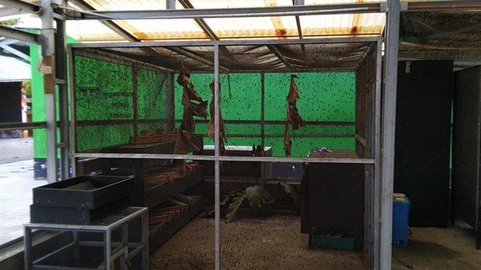 Training Center Larva Black Soldier Fly di Tabalong Produksi Ulat Maggot Ratusan Kg Per Bulan - wisata-kalsel-budidaya-ulat-maggot-di-tabalong-04.jpg