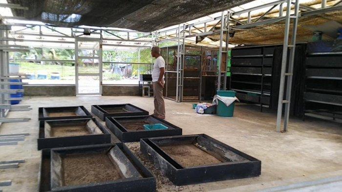 Wisata Kalsel, Training Center Budidaya Ulat Maggot di Tabalong Juga Dikunjungi Warga Luar Tabalong - wisata-kalsel-budidaya-ulat-maggot-di-tabalong-06.jpg