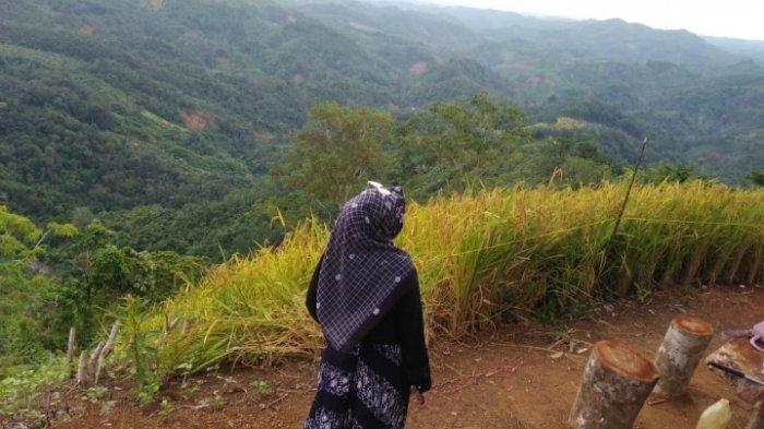 Wisata Kalsel Puncak Titian Musang di Hantakan HST, Tawarkan Pesona Alam Pegunungan Meratus - wisata-kalsel-puncak-titian-musang-desa-patikalain-hantakan-kabupaten-hst-kalsel-03.jpg
