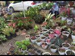 Wisata Kalsel, Berburu Tanaman Hias Ke Pasar Bunga Jalan Ahmad Yani Km 7 Diakhir Pekan
