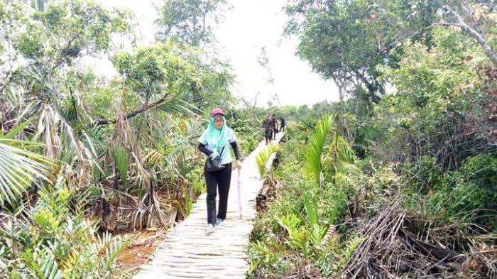 Wisata Kalsel Desa Panjaratan di Kabupaten Tanahlaut, Hanya Belasan Menit dari Kota Pelaihari - wisata-kalsel-eksotis-wisata-alam-hutan-panjaratan-di-kabupaten-tanahlaut-kalsel.jpg