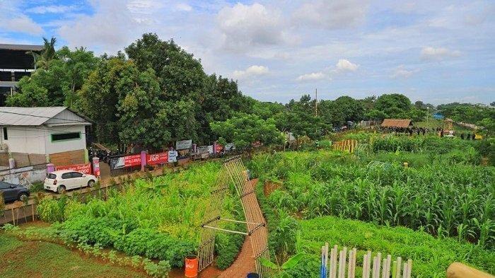 Agrowisata Ecofarm di Kota Tangerang, menjadi alternatif tempat wisata. Beragam jenis tanaman hias dan tanaman produktif tersedia di Ecofarm.