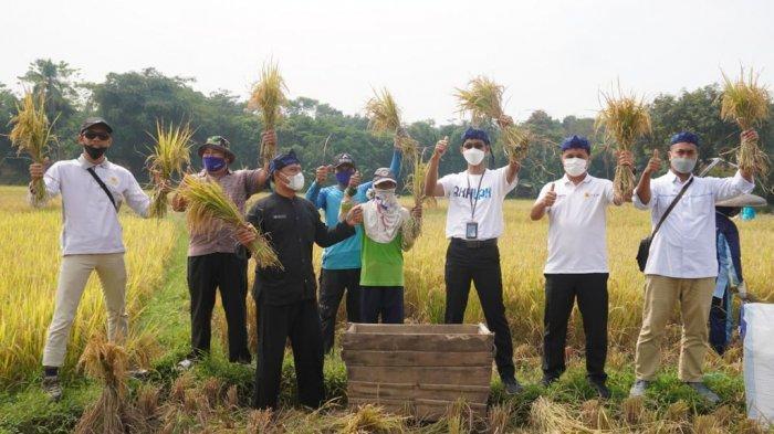PLN UID Banten Berikan Bantuan bagi Petani di Sajira Kabupaten Lebak, Mendukung Produktivitas Panen
