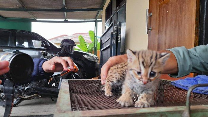 Kumpulan Link Twibbon Hari Hewan Sedunia atau World Animal Day, Cocok Jadi Status di Media Sosial