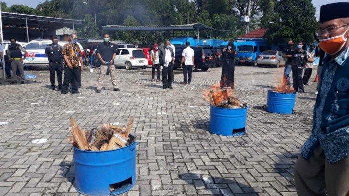 BNN Banten Musnahkan 298 Kg Ganja dan 989 Gram Sabu Hasil Penangkapan Selama Pandemi Covid-19