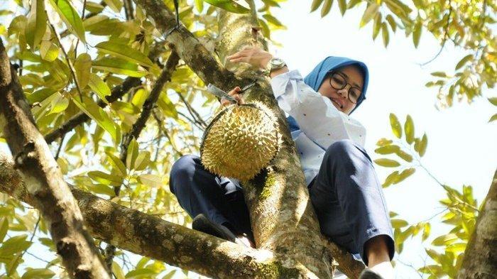 Bupati Lebak Iti Octavia memanjat pohon durian