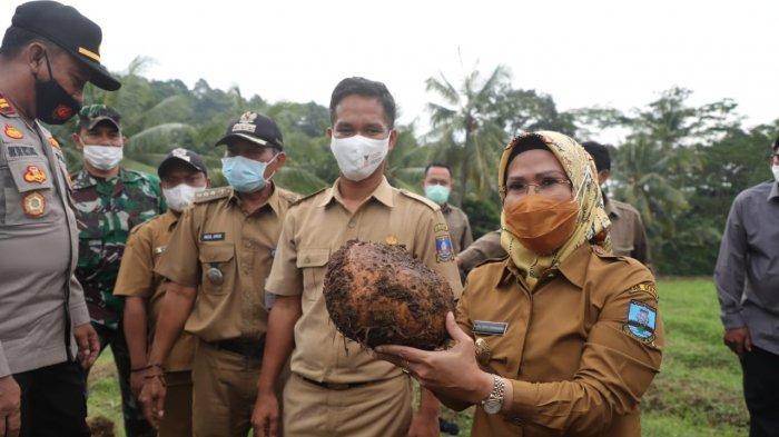Bupati Serang Ratu Tatu Chasanah Ingin Ada Sentra Produk Porang dan Bidik Pasar Luar Negeri