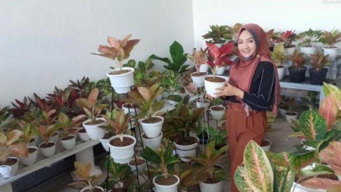 Pakai Irisan Bawang Merah Berikut 5 Cara Mudah Merawat Tanaman Aglonema Agar Tidak Mudah Mati Tribun Banten