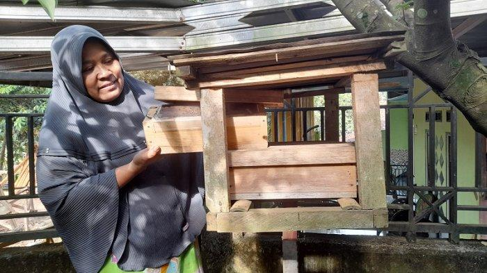 Berawal Iseng Tebang Pohon, Kisah Warga Desa Damping Sukses Jadi Peternak Lebah Madu Trigona