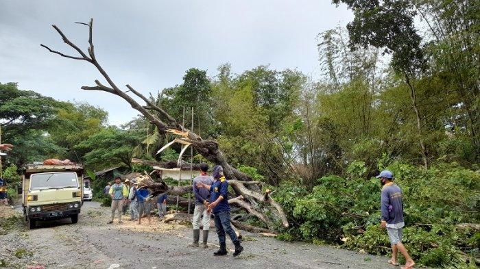 Ada Pohon Tumbang, Lalu Lintas Jalan Ciruas-Pontang di Kabupaten Serang Macet Hingga 3 Jam