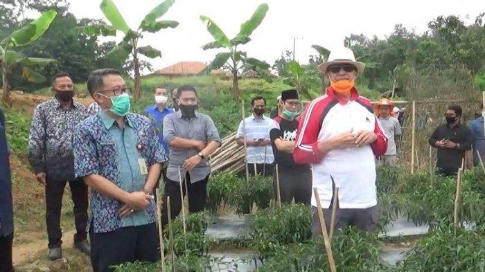 Gubernur Banten Minta Tanam Cabai, Labu, dan Ketela untuk Pemulihan Ekonomi Setelah Covid-19