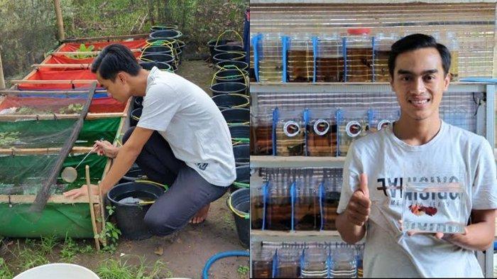 Pemuda di Pandeglang Ini Lakukan Budidaya Ikan Cupang di Tengah Pandemi, Omsetnya Jutaan Rupiah