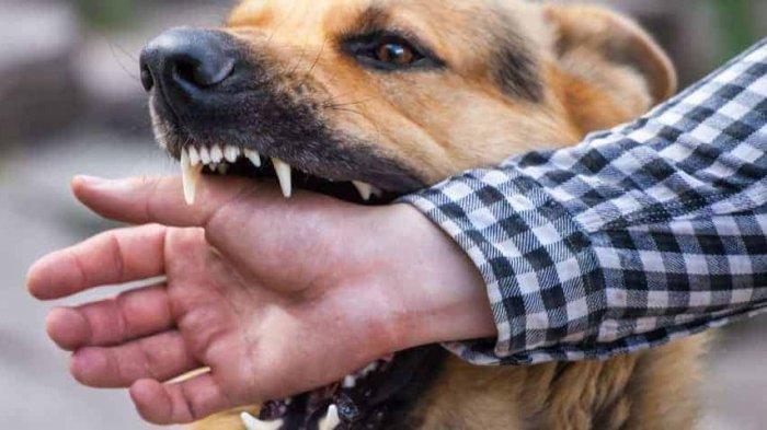 Anjing Liar Resahkan Warga Pelawad Serang, Seorang Anak Digigit, Damkar Cari Tak Ketemu