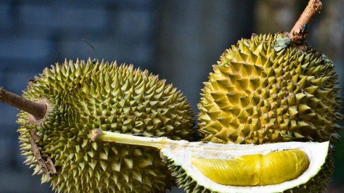 Ilustrasi durian - 5 Tips Mudah Memilih Durian dengan Daging Tebal dan Manis