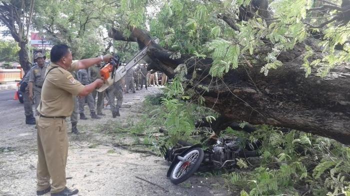 Pohon Tumbang di Kota Serang, Pemotor dan Penumpangnya Tertimpa, Sempat Ada Suara Krek