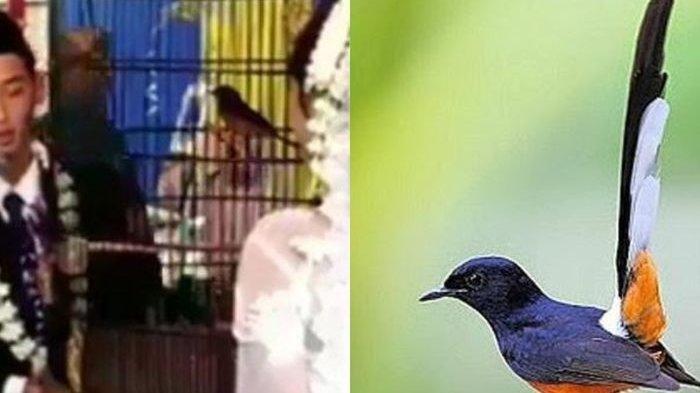 WNI Tewas Ditembak Aparat Malaysia Diduga Gara-gara Burung
