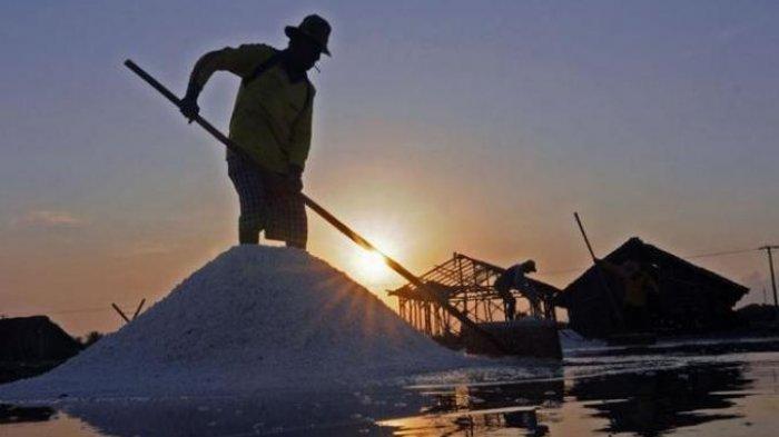 DKPP: Potensi Produksi Garam di Kabupaten Serang Melimpah, Sayang Masih Terkendala Pemasaran