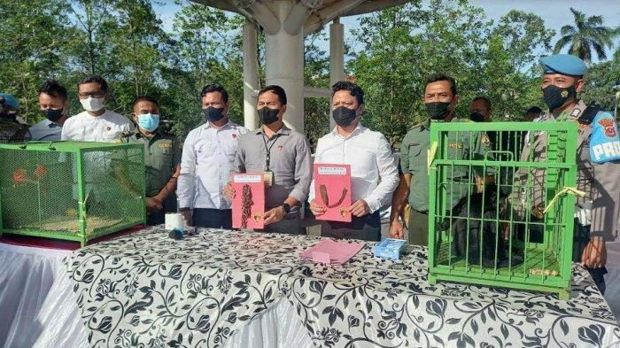 Ikat Lutung Kelabu yang Terancam Punah Pakai Rantai di Pohon, Warga Cilegon Ditangkap Polisi