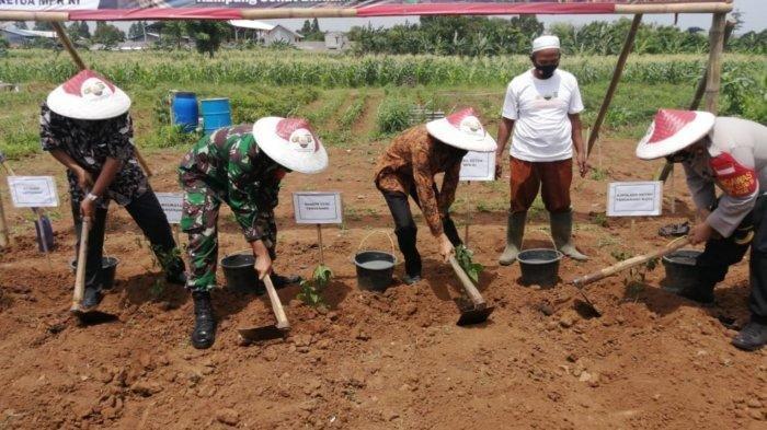 Kota Tangerang Miliki Ladang untuk Ketahanan Pangan, Omzet Capai Rp 700 Juta