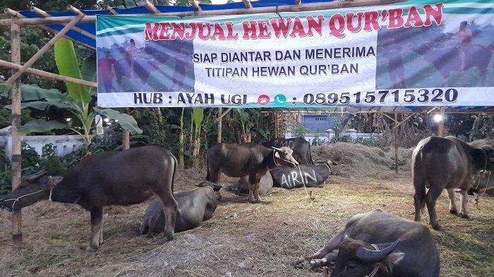 Aturan Berkurban saat Idul Adha di Tengah PPKM Darurat: Dilarang Ada Antrean Pembagian Daging