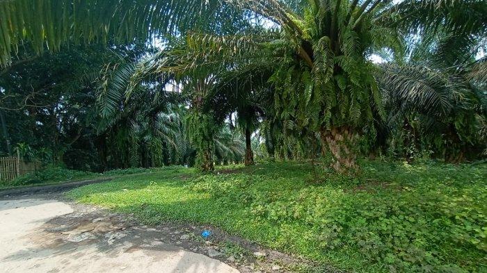 Cerita Korban Percobaan Begal Payudara di Rangkasbitung Lebak, Ungkap Ciri-ciri Pelaku