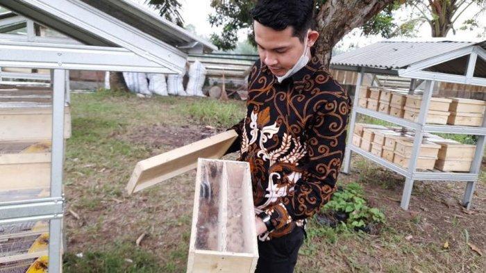 Manfaat Budidaya Lebah Trigona atau Klanceng, Tak Menyengat dan Hasilkan Madu Kaya Khasiat