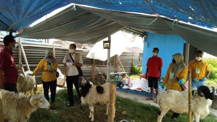 Idul Adha, Dinas Pertanian Banten Monitoring Kesehatan Ternak