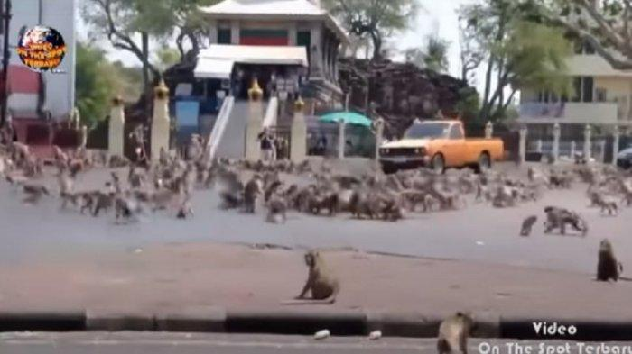 Monyet Liar Serang Warga di Perumahan Puspiptek Tangsel, Warga Jadi Korban Hingga Terluka Parah