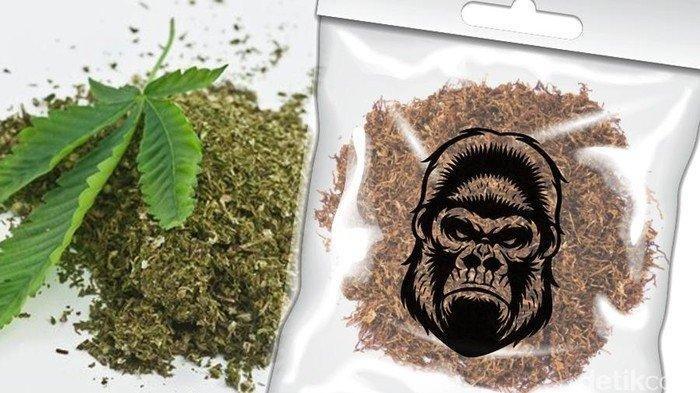 Rumah di Cilegon Digeledah, Produksi Tembakau Gorila dalam Paket Siap Edar