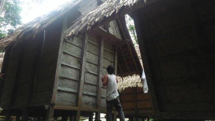 Rahasia Ketahanan Pangan Suku Baduy dengan Menanam Padi Huma