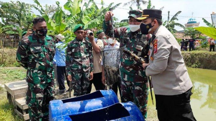Kelompok Tani di Kragilan Serang Panen Lele Untuk Dibagikan ke Warga yang Terdampak Covid-19