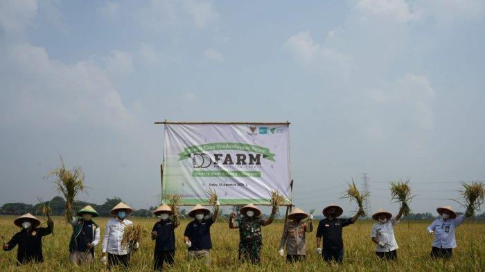 Panen Raya Pemberdayaan Petani Digelar di Desa Beberan, Ciruas, Kabupaten Serang