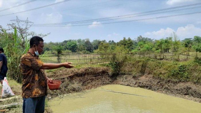 Manfaatkan Lahan Kosong, Pemuda Asal Serang Bertani dan Beternak, Hasil Panennya Dibagikan ke Warga