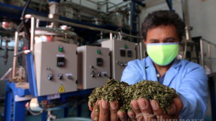 Kemenkes Ajak Masyarakat Konsumsi Obat Herbal Lokal
