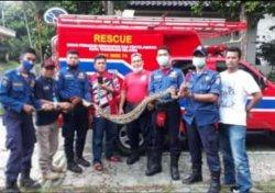 Dinas Pemadam Kebakaran Temukan Ular di Rumah Mantan Calon Wali Kota Tangerang Selatan