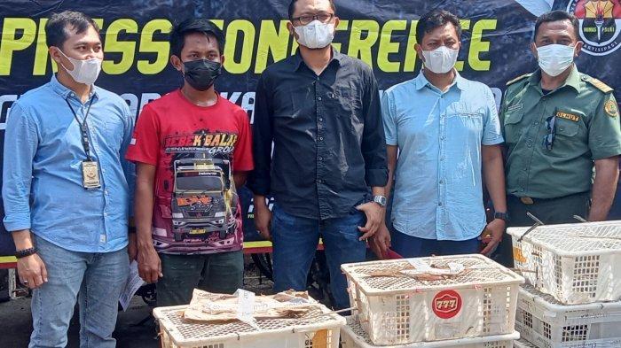 Polres Cilegon Menggagalkan Penyelundupan 2083 Ekor Burung dari Lampung