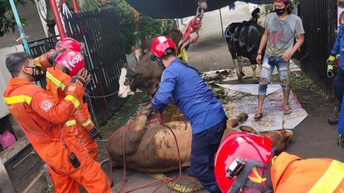 Cerita Damkar Tangsel Bantu Pemotongan Hewan Kurban: Sapi Kabur hingga Terperosok ke Parit