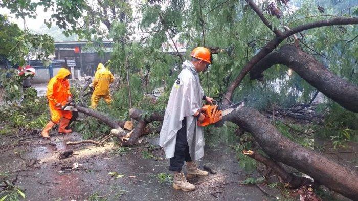 Hujan deras disertai angin kencang mengakibatkan pohon tumbang di Jalan Tol Lama, Kelurahan Kaligandu, Kecamatan Serang, Kota Serang pada Sabtu (3/4/2021) pagi. Seorang pengendara sepeda motor dan penumpangnya menjadi korban tertimpa batang pohon yang tumbang.