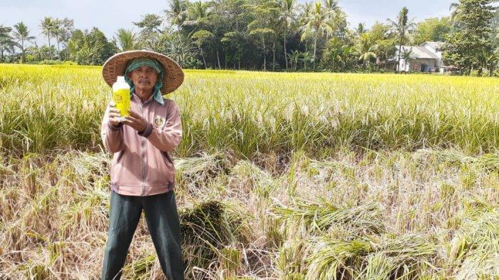 Dukung Ketahanan Pangan, Distan Banten Salurkan Pupuk Subsidi ke Delapan Kabupaten dan Kota